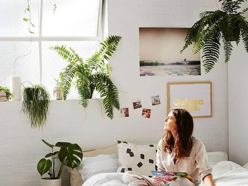 plantas na decoração do quarto